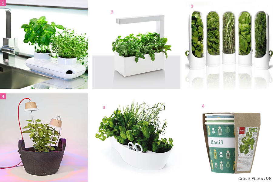 Pot herbe aromatique for Basilic culture interieur
