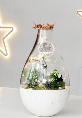 cr er un terrarium de no l avec des plantes d 39 int rieur. Black Bedroom Furniture Sets. Home Design Ideas
